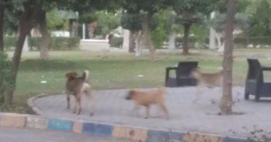 """قارئ يستغيث من الكلاب الضالة فى شارع """"رايل"""" بحلوان"""