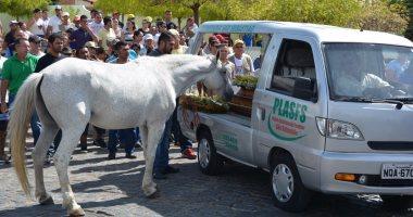 بالصور..حصان يلقى نظرة وداع على صاحبه خلال تشييع جنازته بالبرازيل