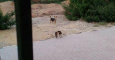 أهالى منطقة العباسية يشكون من انتشار الكلاب الضالة داخل مستشفى الحميات