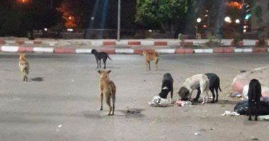 انتشار الكلاب الضالة يهدد المواطنين بالخوف والذعر فى منطقة أطلس بأسوان