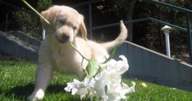 عاطل يعتدى على صديقه بسلاح أبيض فى مشاجرة بسبب خلاف على شراء كلب بحلوان