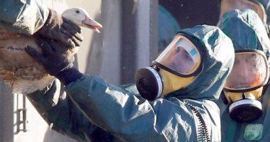 الزراعة: تحصين 2.1 مليون رأس طائر ضد أنفلونزا الطيور والأمراض الوبائية