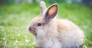 تعرف على تفاصيل قرار وزير الزراعة حول مزارع الأرانب فى 5 معلومات