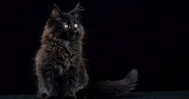"""اعرف .. لماذا يتشائم المصريون من """"القطة السوداء""""؟"""