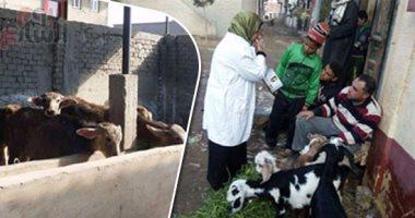 تحصين 390 ألف رأس ماشية ضد مرض الحمى القلاعية خلال 3 أيام