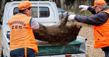 فرنسا تشرع فى بناء سياج على حدودها مع بلجيكا لمنع تفشى حمى الخنازير