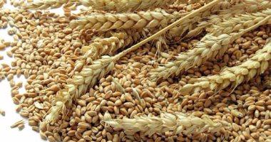 الجزائر تشترى نحو 400-570 ألف طن من القمح فى مناقصة