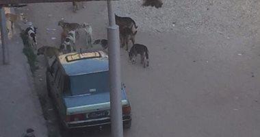 """""""الكلاب الضالة"""" مشكلة تؤرق أهالى حى الكويت فى بورسعيد"""