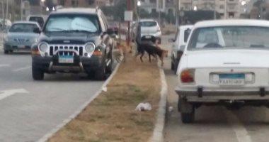 موظفو القرية التكنولوجية بالمعادى يشكون انتشار الكلاب الضالة بالمنطقة
