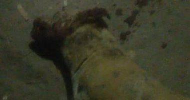 كلاب مسعورة تهاجم قرية أولاد محمد بأسيوط وتسبب فى عقر 9 أفراد