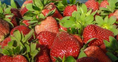 """""""الزراعة"""": صادراتنا من الفراولة 21 ألف طن والعنب 230 ألف طن"""