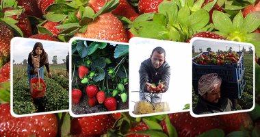 الزراعة: ارتفاع صادرات البرتقال والفراولة لمليون و371 ألف طن