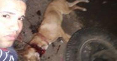 """بالصور.. شاب يذبح كلبًا بوحشية.. ويؤكد: """"عايشينها بالإجرام.. فدا الشيطان"""""""