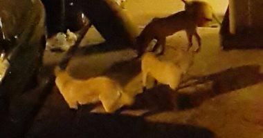 """بالصور..انتشار """"الكلاب الضالة"""" بشارع الإخشيد فى منيل الروضة"""