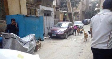 شكوى من انتشار الكلاب الضالة بشوارع المنيل