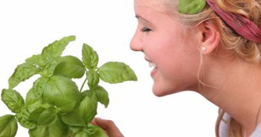Study: Basil contributes to the prevention of Alzheimer's and protects you from dementia