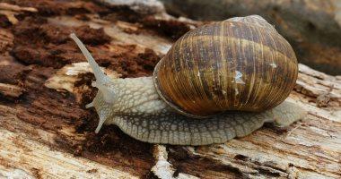 ضبط شخصين بحوزتهما 103 حيوانات مهددة بالانقراض وقواقع بحرية