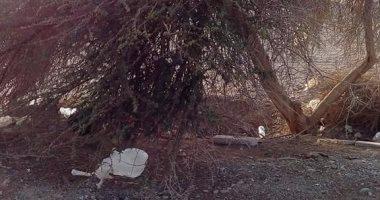 بالصور.. أهالى مرسى علم والمحميات يتصدون لمحاولة قطع شجرة عمرها 100 عام