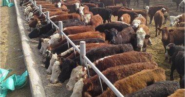 تحديث قواعد بيانات الثروة الحيوانية لتحديد الكميات المستوردة من الخارج