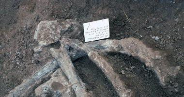 علماء صينيون يكتشفون حفرية طائر من عصر الديناصورات