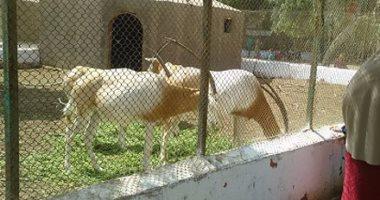 بالصور.. اليوم السابع فى جولة داخل حديقة الحيوان بالفيوم