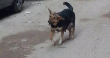 أهالى عين شمس يشكون من انتشار الكلاب الضالة بالشوارع
