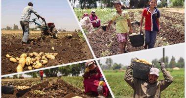 تعرف على أهم محاصيل مصر التصديرية وأسواق المنتجات الجديدة × 10 معلومات