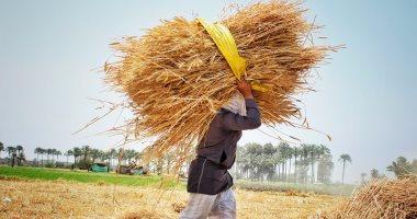 مسئول: السودان سيحرر سعر القمح ويترك استيراده للقطاع الخاص
