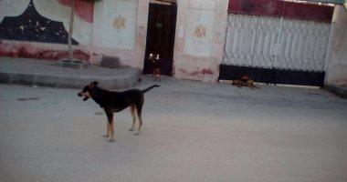 شكوى من استمرار تواجد الكلاب الضالة بمنطقة زهراء بمدينة نصر