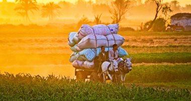 """665 مليون جنيه لدعم """"المزارعين"""" بالموازنة الجديدة"""