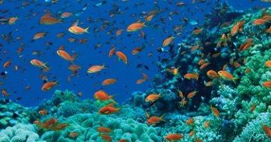 الشعاب المرجانية حول العالم قد تختفى بحلول عام 2100 بسبب تغير المناخ