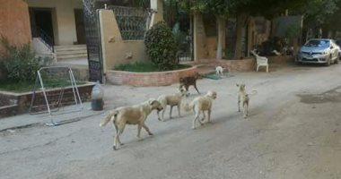 غضب أهالى حدائق الأهرام من انتشار الكلاب الضالة بصورة مفزعة
