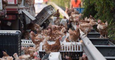 الرقابة البيطرية: العالم كله يتجه لمنع تداول الطيور الحية