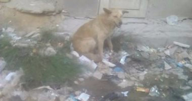 قارئ يشكو انتشار الكلاب الضالة فى منطقة الفرز بالسويس