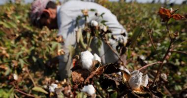 وزيرا الزراعة والقوى العاملة يبحثان توسيع زراعة القطن لسد متطلبات مصانع الغزل