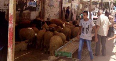 كيف تواجه الخدمات البيطرية غش اللحوم قبل عيد الأضحى × 9 معلومات