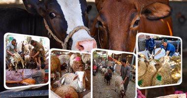 شعبة القصابين : أسعار اللحوم مستقرة فى موسم الأضحى والإقبال يزيد على الضأن