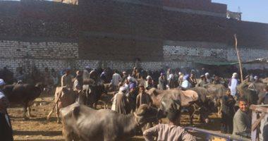 إصابة 5 أشخاص فى مشاجرة بسوق المواشى غرب الإسكندرية