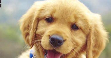 محكمة إيطالية تمنح سيدة أول إجازة مدفوعة لرعاية كلبها المريض