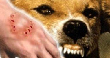 يتحول الكلب فمباير؟