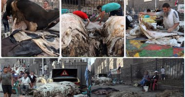 عضو بنقابة البيطريين: إلقاء جلود الذبائح بالشوارع تؤدى إلى كوارث بيئية