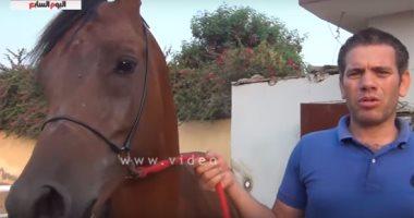 بالفيديو.. تعرف على عشاق الخيول العربية من نجوم الفن