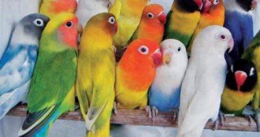 شاهد في دقيقة.. نصائح هامة لحماية الحيوانات والطيور من نشاط الرياح والأتربة