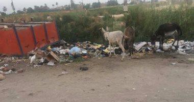 قارئ يشكو القمامة بمدخل قرية الجلاوية فى سوهاج