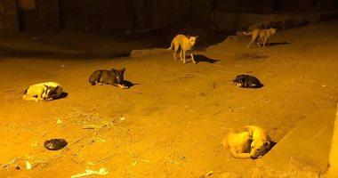 """بالصور.. الكلاب الضالة تعرض حياة الأهالى للخطر فى """"جهينة القبلية"""" بالشرقية"""