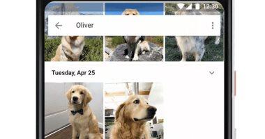 تطبيق Google Photos يمكنه الآن التعرف على الحيوانات داخل الصور -