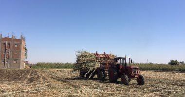 ارتفاع المساحات المنزرعة من الذرة لـ2.520 مليون فدان