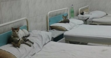 أمين عام المستشفيات العرب: اقتصاديات الصحة أهم المواضيع العالمية حاليا