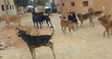 انتشار الكلاب الضالة فى شارع الأصبغ بالزيتون والأهالى يطالبون بنقلها