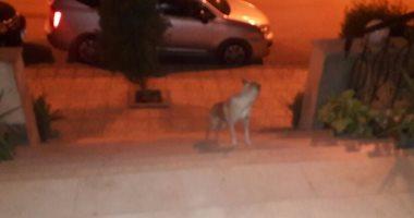 قارئة تناشد بتعقب الكلاب الضالة بعد عقر ابنها فى الهرم